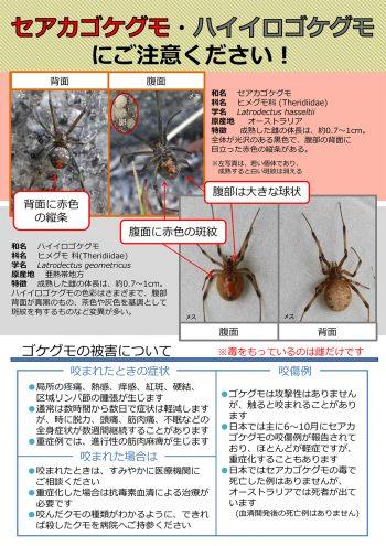 ハイイロゴケグモに要注意 画像1